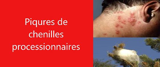 PIQURE CHENILLES PROCESSIONNAIRES