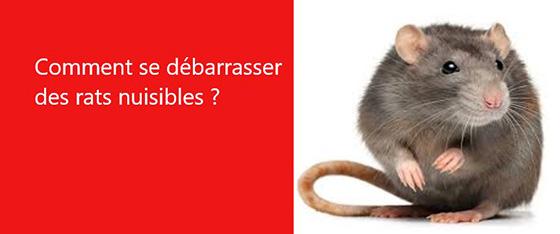 comment se debarrasser les rats les exterminateurs