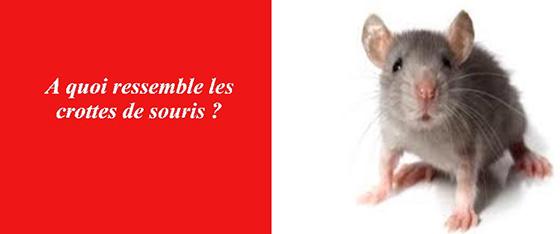 crotte souris les exterminateurs