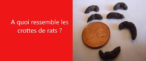 crottes rats les exterminateurs