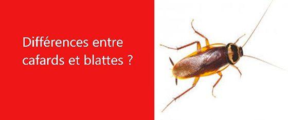 difference entre cafards et blattes les exterminateurs