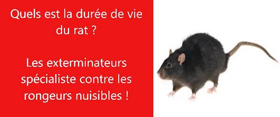 duree de vie rats les exterminateurs