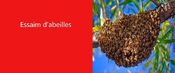 j'ai un esseim d'abeilles les exterminateurs