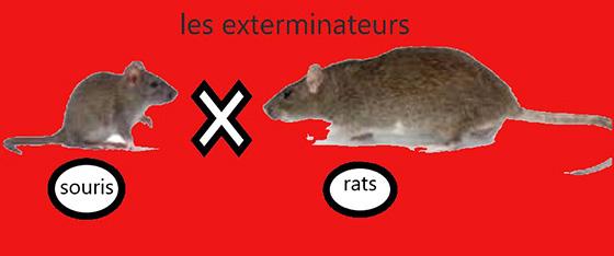 les exterminateurs les souris et les rats