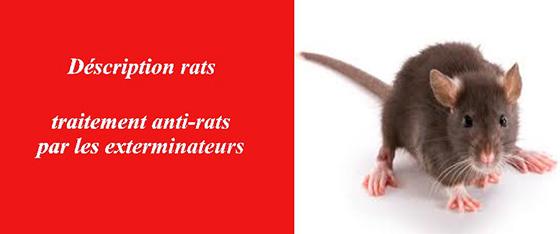les rats a paris les exterminateurs