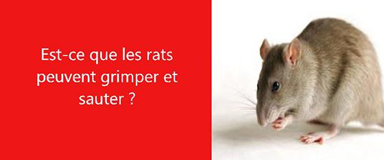 les rats deratisation les exterminateurs