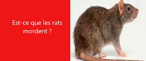 les rats mordent les exterminateurs