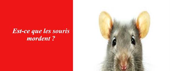 les souris ile de france les exterminateurs