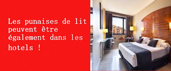 punaises de lit entreprise reconna tre d tecter traiter paris et idf. Black Bedroom Furniture Sets. Home Design Ideas
