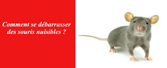 se debarraser des souris les exterminateurs