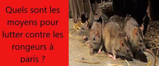 lutte-rats-a-paris