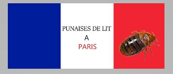 punaise de lit a paris