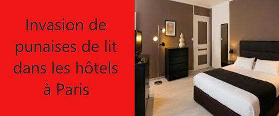 punaises-de-lit-hotel-paris