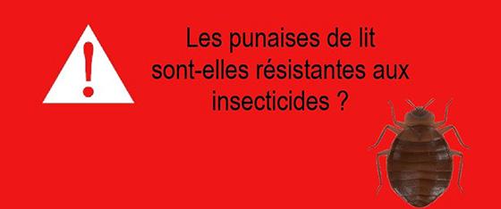 punaises-de-lit-resistente