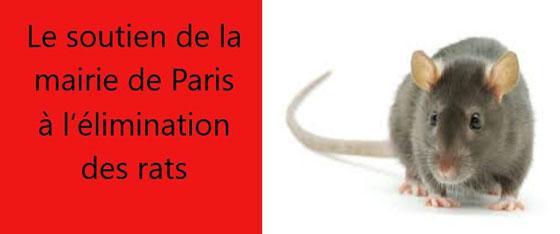 soutien-mairie-rats-deratisation-paris
