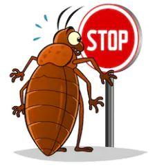Stop-punaise-de-lit