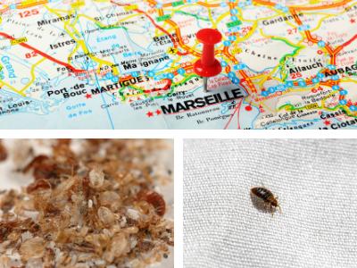 Punaises de lit Marseille
